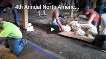 4th-Annual-North-American-Alpaca-Shearing-Contest-6