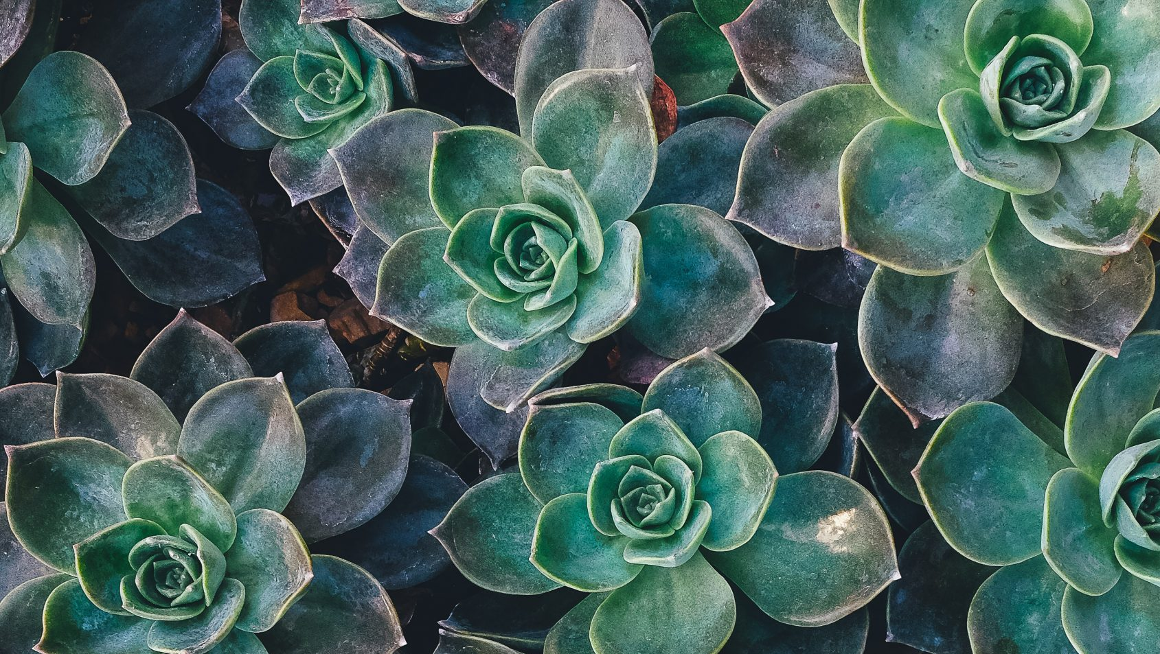Scientists Discover How Plants Talk To Each Other