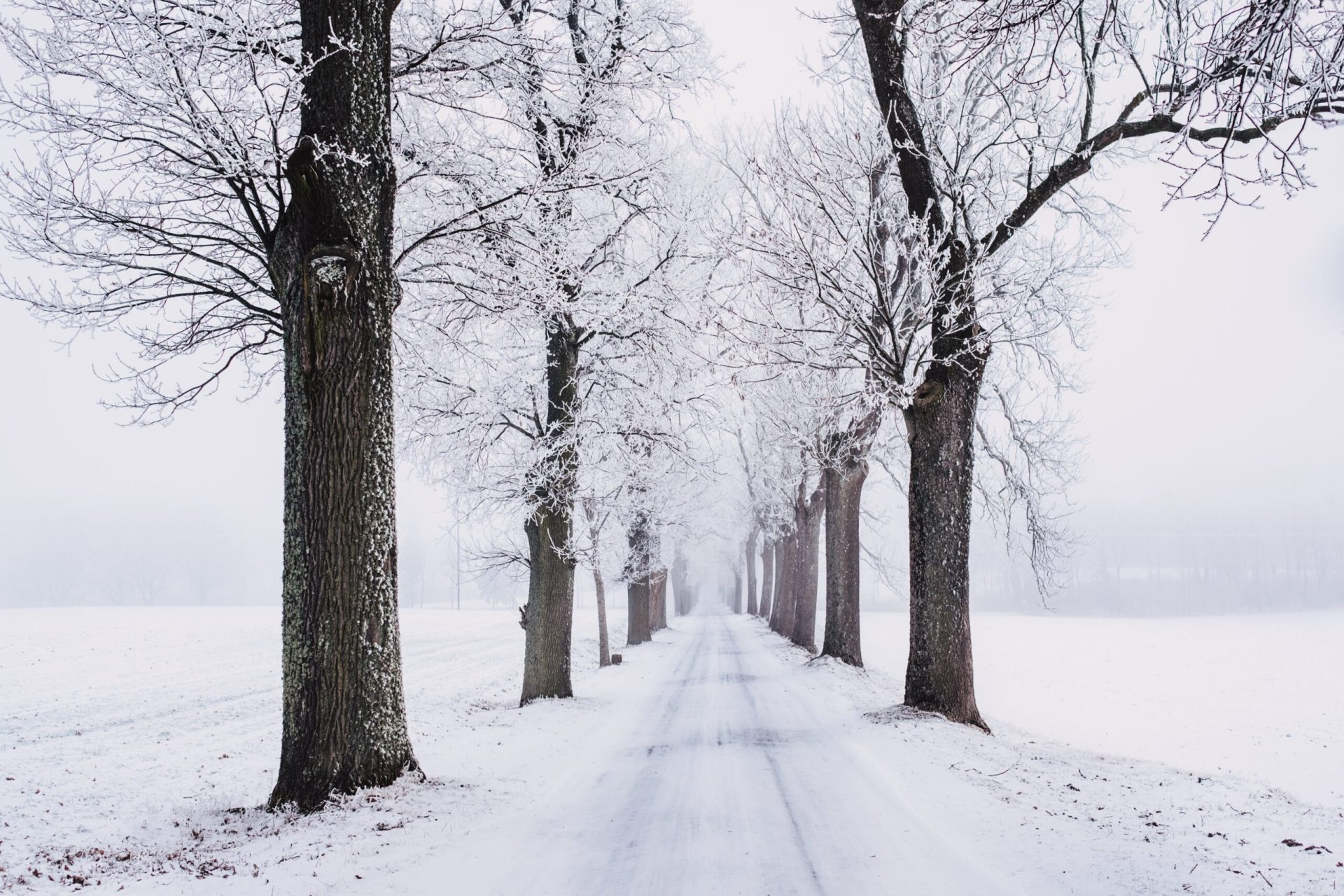 Winter Trees Image - Photography Scholarships in Winter
