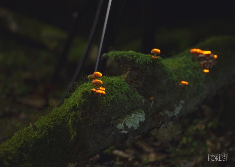 Bio-luminescent Forest - Champignons