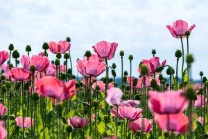 initiation en horticulture