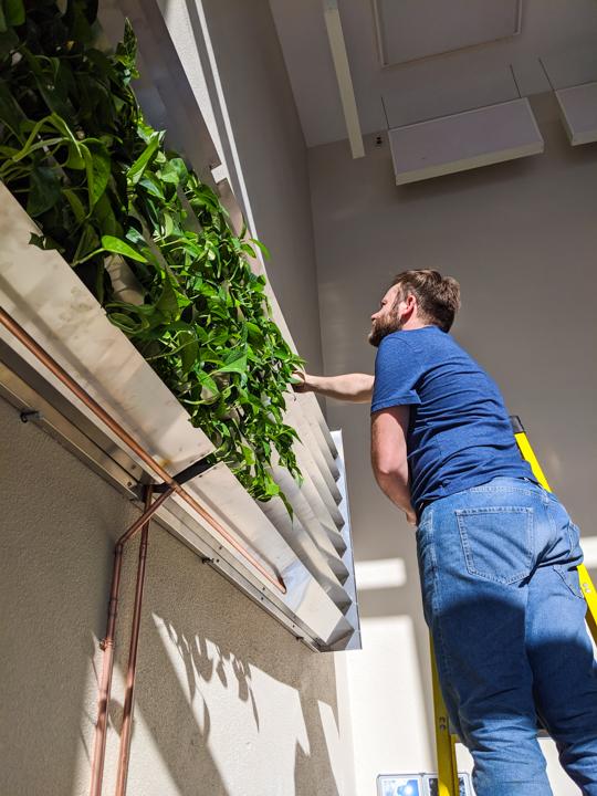 Mur végétal - modulaire - La ligne verte (10)