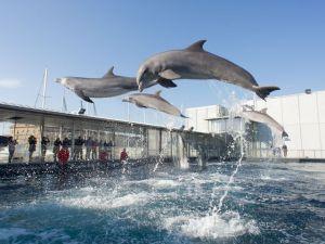 Goccia debutta tra i delfini dell'Acquario