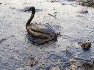 Golfo del Messico, maxi risarcimento dopo disastro ambientale del 2010