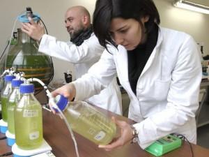 Carburante non inquinante dalle alghe