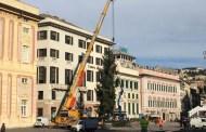 In piazza De Ferrari torna l'albero di Natale