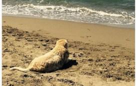 Antonella Clerici dice addio al cane Oliver: