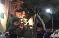 Genova - Vento forte per tutta la notte, albero caduto a Castelletto