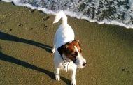 Savona - Spiaggia per cani, ENPA ci riprova: