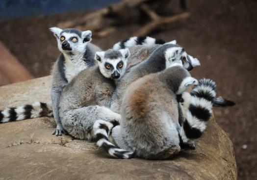9種瀕臨絕種動物