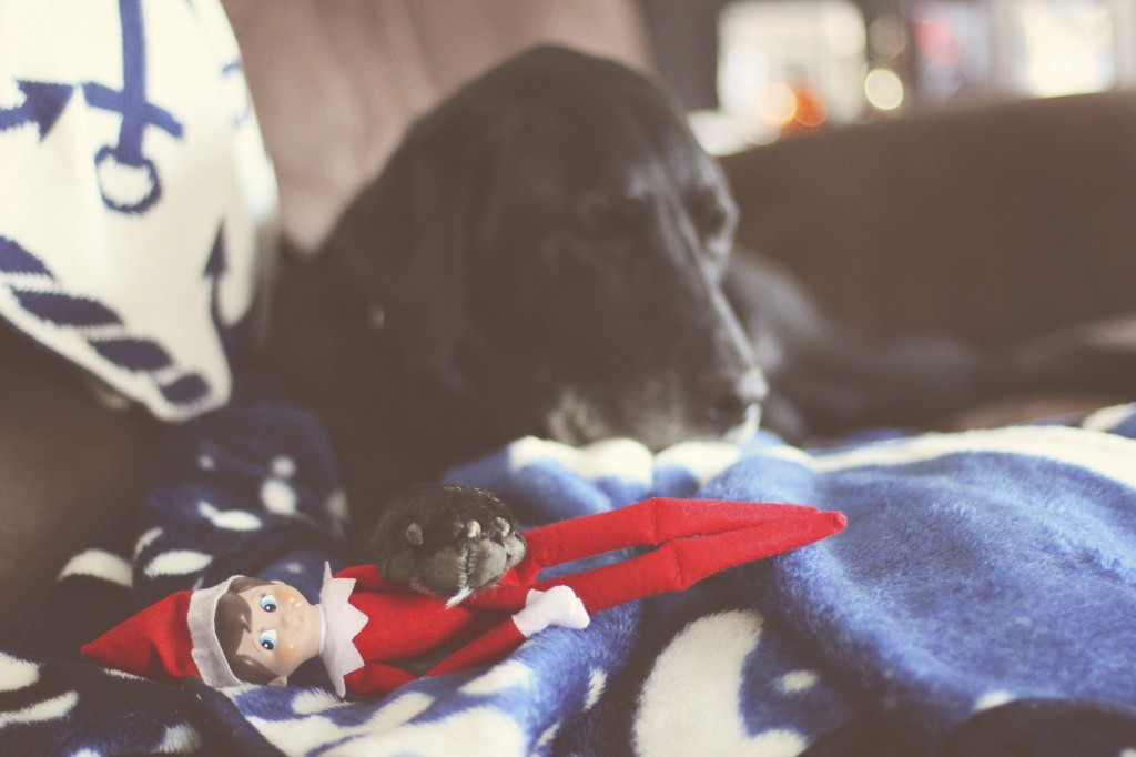 Elf on the Shelf: Harvey Meets Hayden