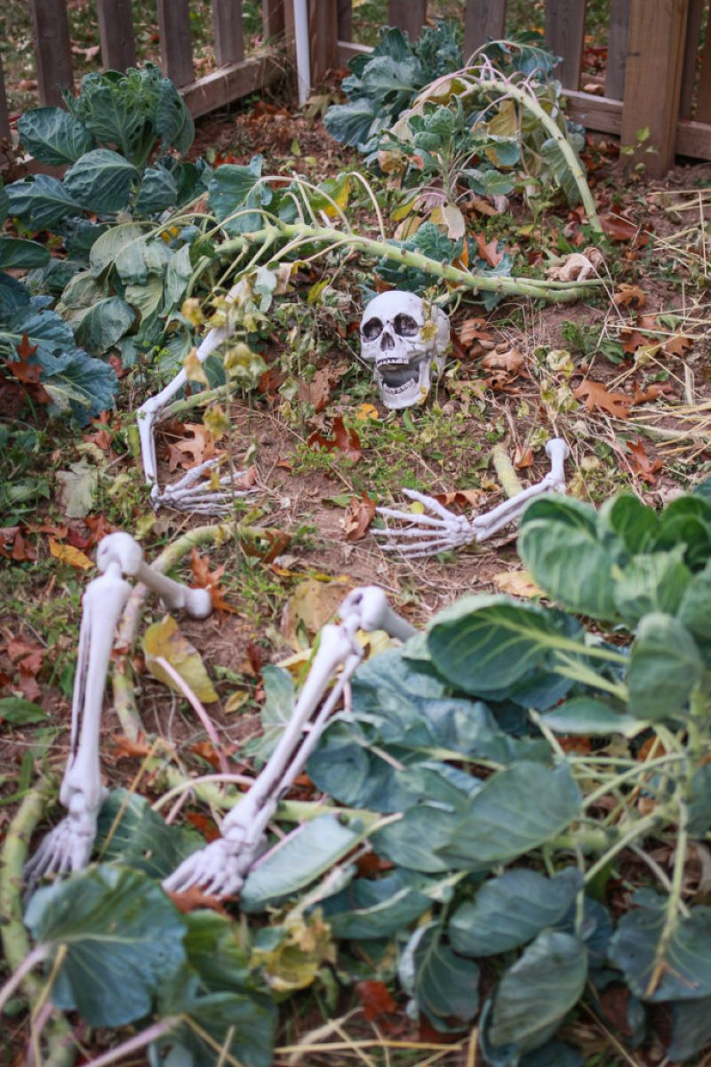 Skeletons among the brussel sprouts