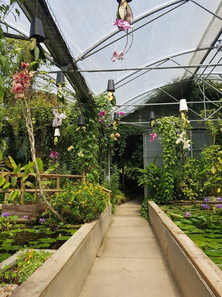 Orchidées suspendues dans la serre exotique - Jardins des Martels
