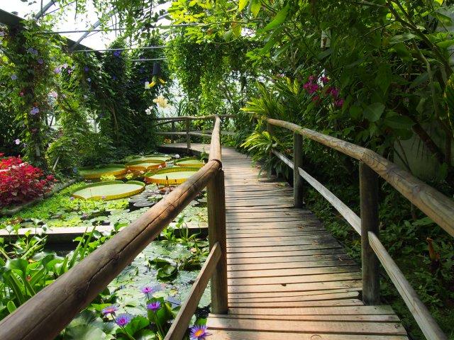 Serre tropicale - Jardins des Martels