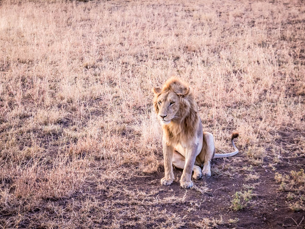 Photo guide - A safari in Tanzania - Serengeti National Park - travel guide in pictures