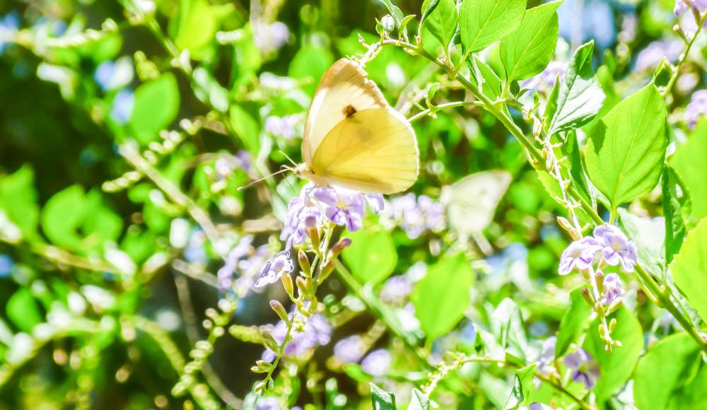 Hidden gems in Europe - Butterfly valley Petaloudes Rhodes Greece - Best unique places to visit