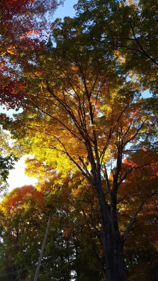 autumn-trees-2016