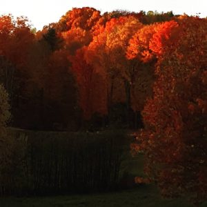 sun-setting-on-fall-leaves