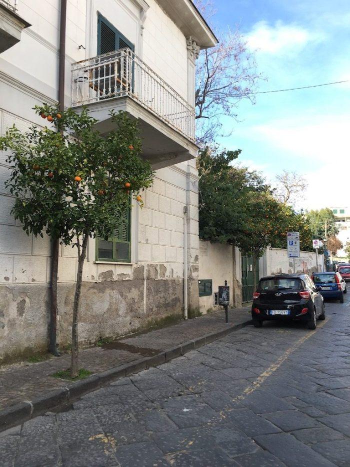 Orange trees, Corso Vittoria Colonna, Ischia Ponte