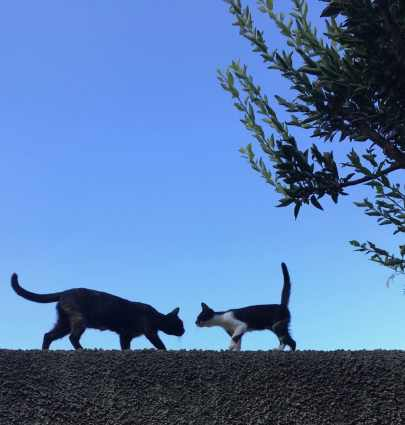 Ischia and the cats in my life
