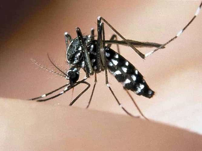 mosquitoes in Italy