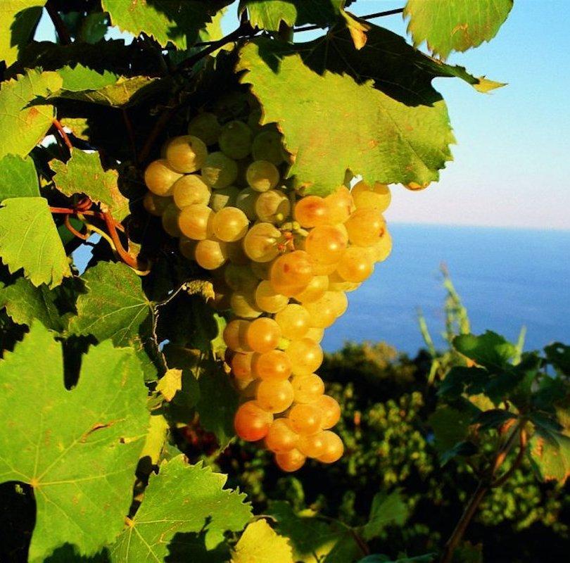 September in Ischia