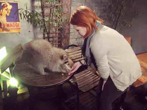 Blind Alley Raccoon Cafe | Linda Goes East