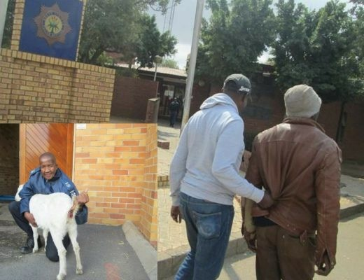 Man found guilty of raping his neighbour's pregnant goat in South Africa