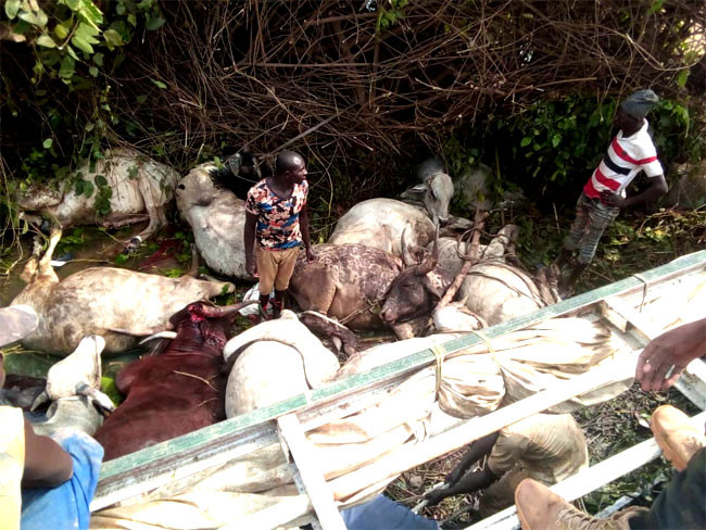 23 people killed after truck conveying humans and cows crashed in Niger state lindaikejisblog 5