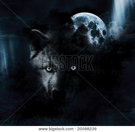 wolf + moon