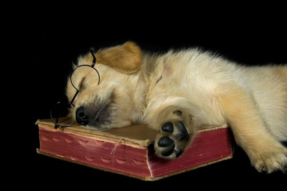 Puppy Sleeping on Book