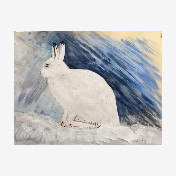 Mountain Hare in Winter