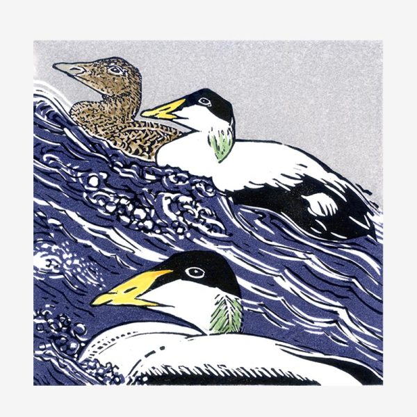 Eider at Sea - linocut