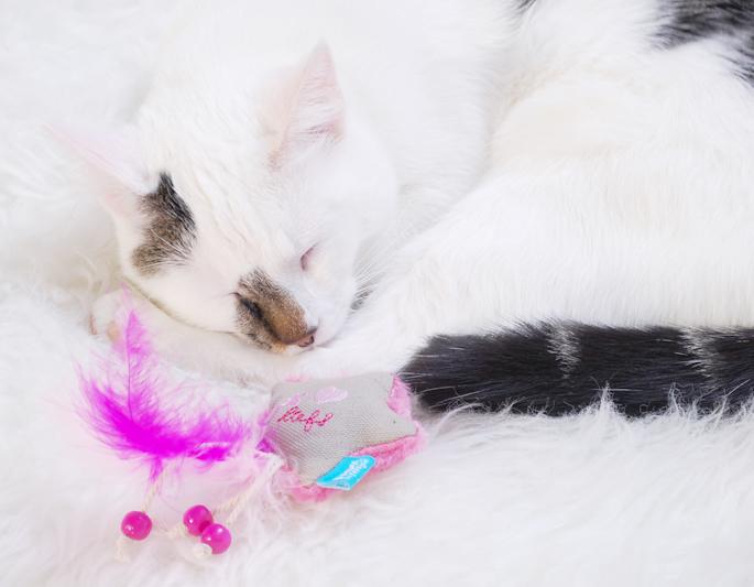 Lief Lief! kattenspeelgoed met catnip lief lifestyle review kat spelen lifestyle by linda jip