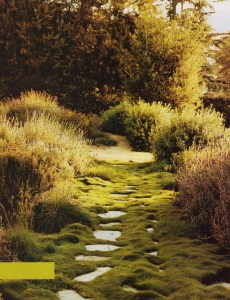 gardens grow wonderful memories stepping stones on moss covered path in garden
