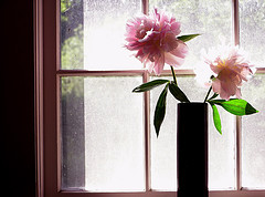 Pink peonies on window sill, Bring the power of Nature indoors