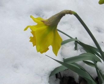 Der Frühling setzt sich durch…