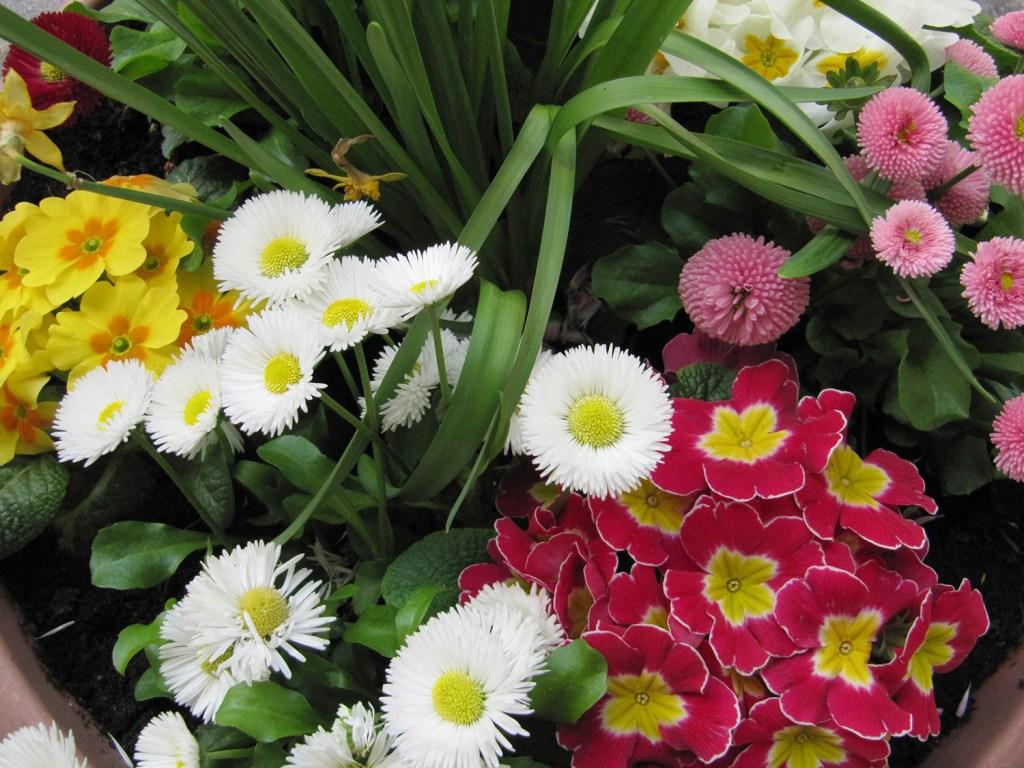 Frühlingsmode am Lindenhof