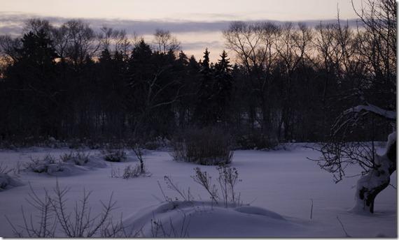 morgonljuset