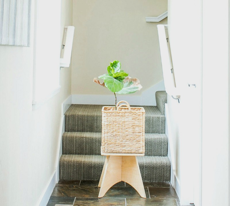 fiddle leaf fig in office