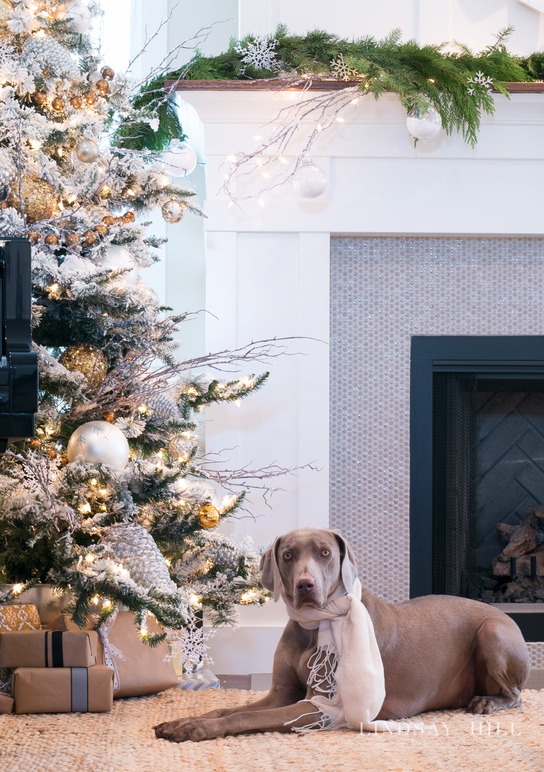 living room christmas tree with dog