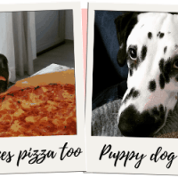 January 2020: The Month That Lasted A Year {Monthly Wrap Up}