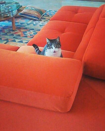 Gatto Divano Pelle.Un Divano A Prova Di Gatto Lineatre Kucita Gli Esperti