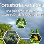 ForesteriaAnaloga1