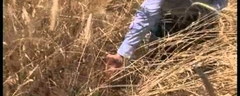04 Recruitment of native grasses.avi