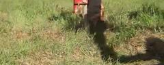 Demo en Son Barrina. Mallorca del cultivador subterraneo Yeomans 2