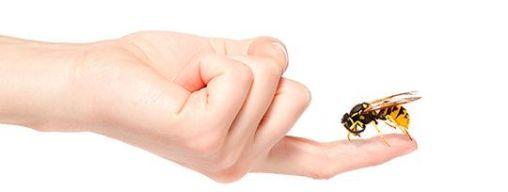 Picaduras de insectos