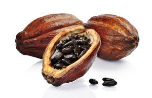 Theobroma cacao L.