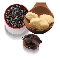 cacao amazónico
