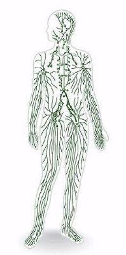 nódulos linfáticos